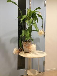 開花2.JPG